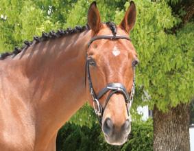 杉谷乗馬クラブのイメージ
